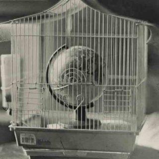 Una exposición recoge el trabajo del artista Raúl Casal empleando técnicas fotográficas de hace dos siglos