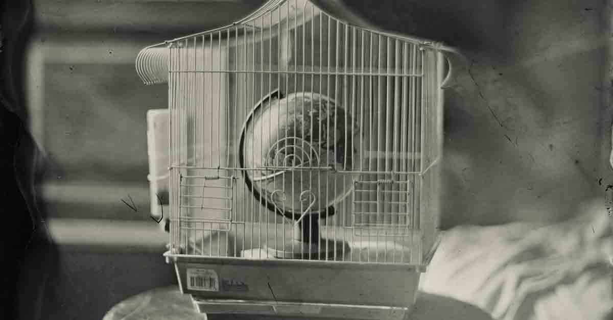 Ampliada una semana más la exposición del artista Raúl Casal basada en técnicas fotográficas de hace dos siglos