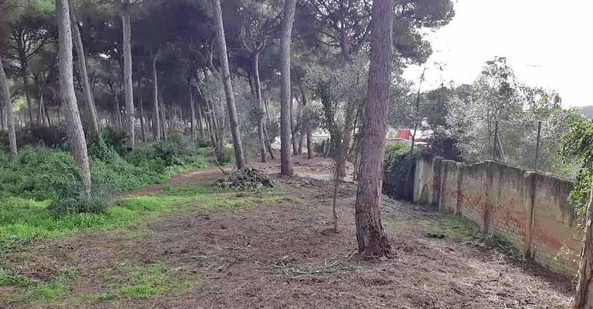 La Junta finaliza la primera fase de los trabajos de mejora en el monte Dunas de San Antón