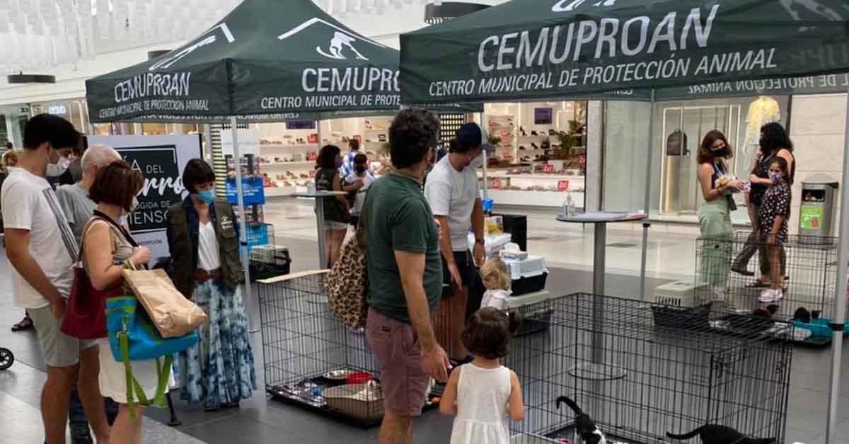 El Cemuproan instala una carpa para potenciar las adopciones