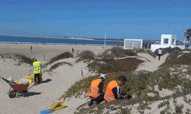 Este sábado se inicia un voluntariado en Los Toruños para restaurar el ecosistema dunar
