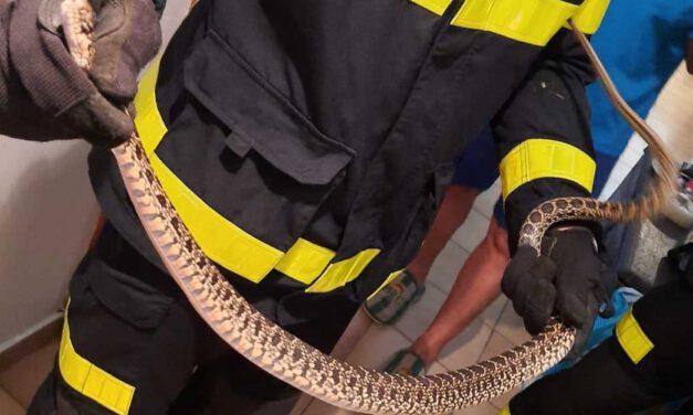 Bomberos capturan una culebra de metro y medio en una vivienda en El Puerto