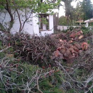 """Ecologistas en Acción denuncia la """"tala indiscriminada"""" de árboles en Vistahermosa"""