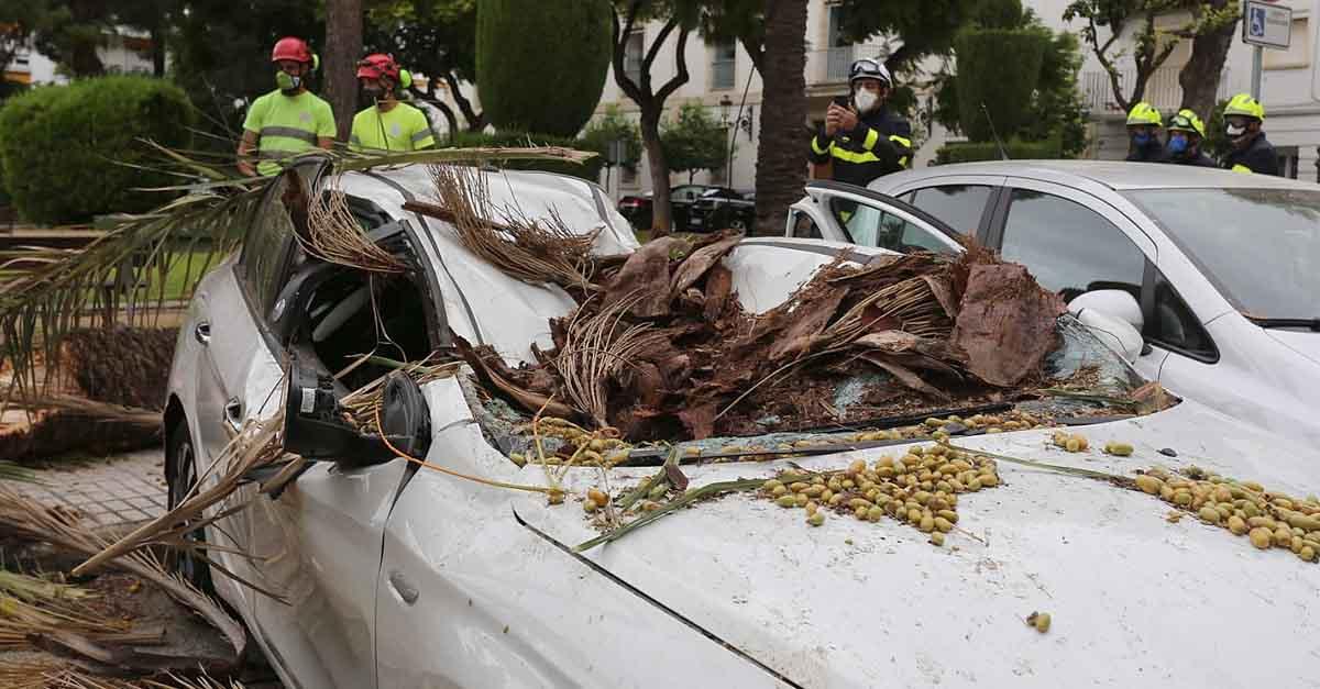 La caída de una palmera causa importantes daños en un vehículo