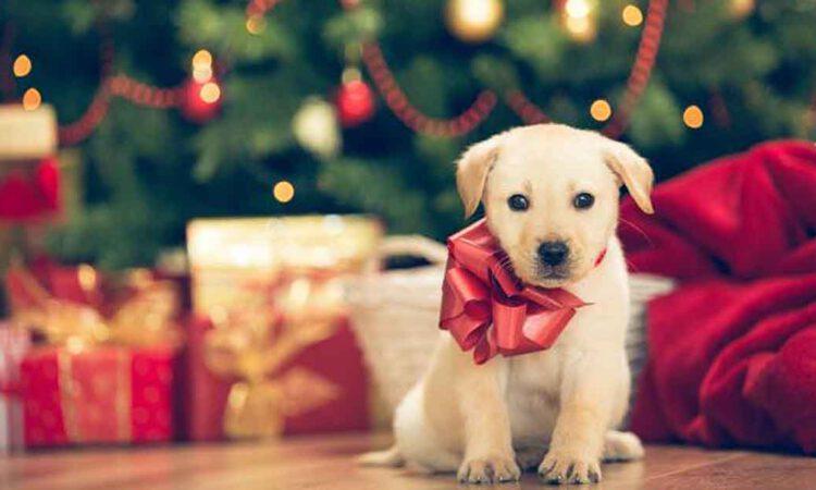 Uprocanes promueve la adopción responsable de mascotas por Navidad