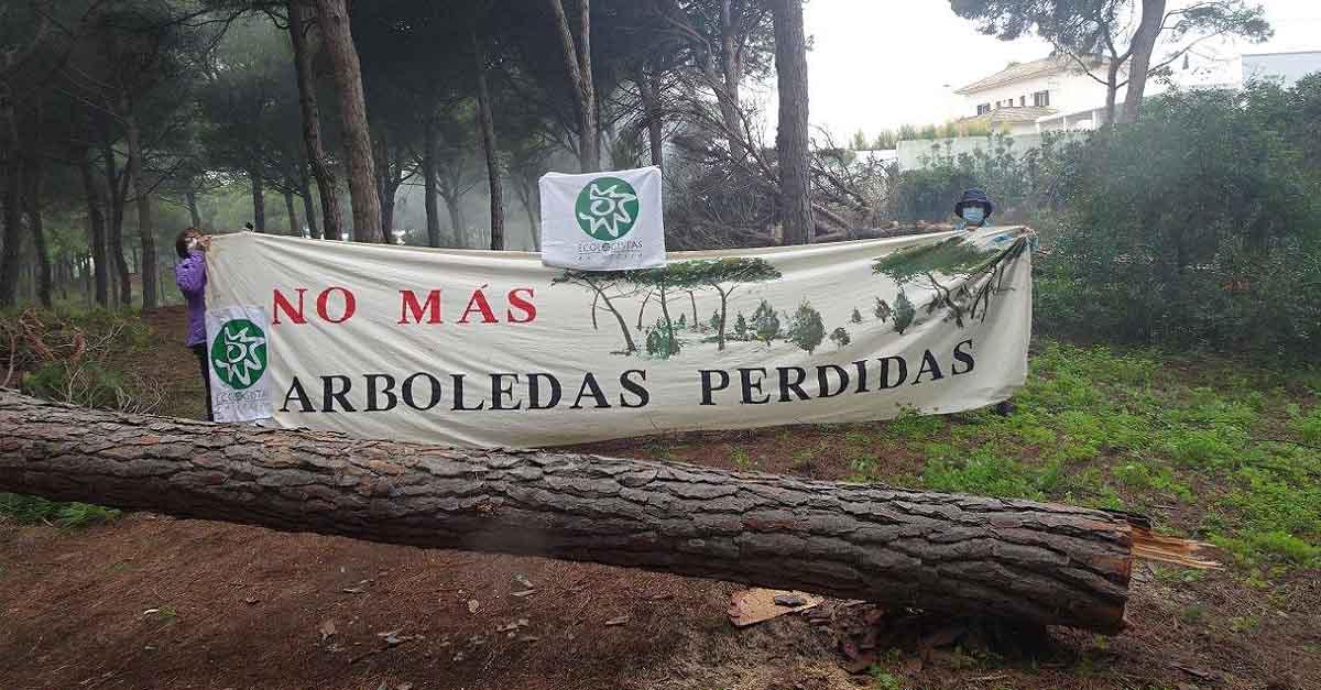 Ecologistas en Acción paraliza la tala de pinos en las Dunas de San Antón