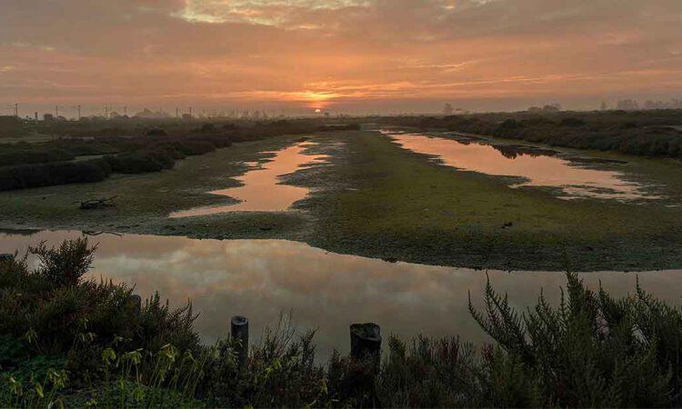 El concurso por el Día de los Humedales de Los Toruños recibe 149 fotografías de 78 autores
