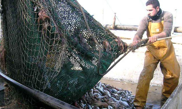 El PP de El Puerto defiende la pesca de arrastre y pide garantizar su continuidad