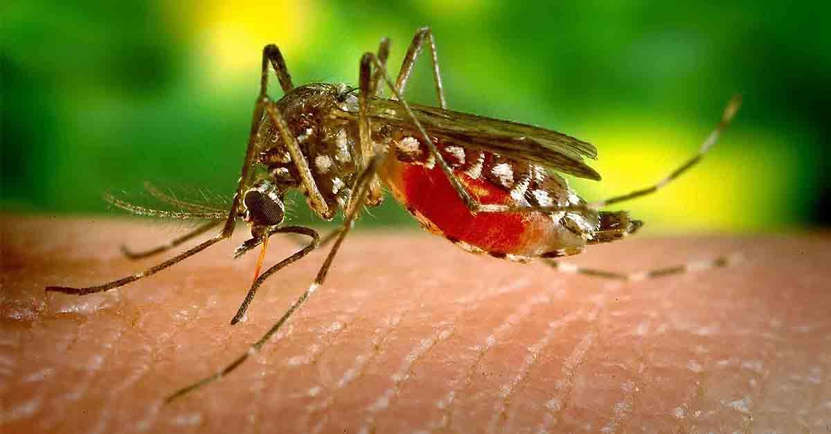 El Puerto pone en marcha una campaña informativa para prevenir las picaduras del mosquito que transmite el Virus del Nilo